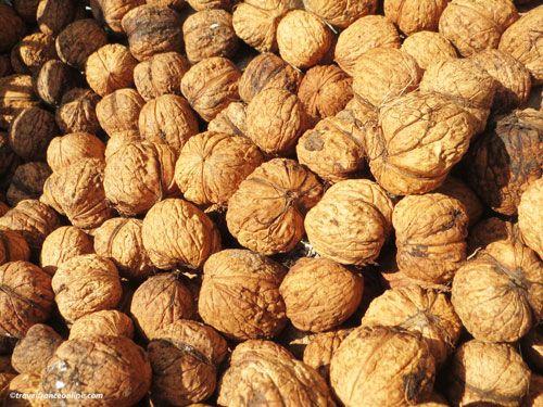 Walnuts from Perigord - Dordogne