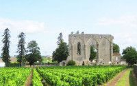 Saint-Emilion wines – Bordelais Aquitaine