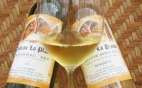 Bergerac Wines – Appellations – Vineyards