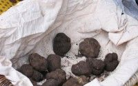 Black Truffle from Perigord – Dordogne