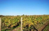 Touraine Vineyard – Appellations – Loire