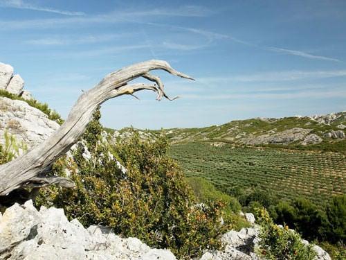 Saint Remy de Provence - Alpilles