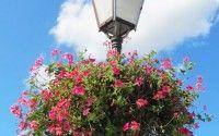Villes et Villages Fleuris – Basic Facts