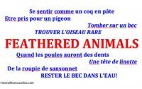 Feathered animals in French colloquialisms