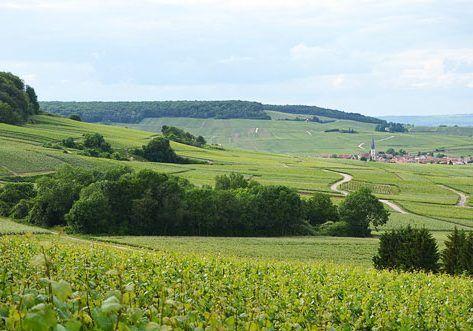 Champagne-Ardenne-Sur_le_flanc_nord_de_la_montagne_de_Reims_DSC_0235